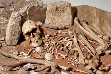 Sépulture mésolithique de Téviec (Saint-Pierre-Quiberon), collections Musée de Préhistoire de Carnac