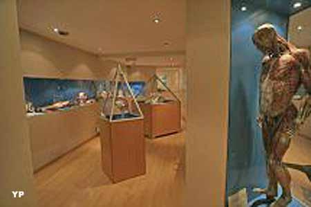 Musée de l'Écorché d'Anatomie