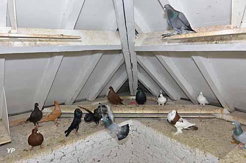 Maison de la Colombophilie et du Patrimoine Local - pigeonnier
