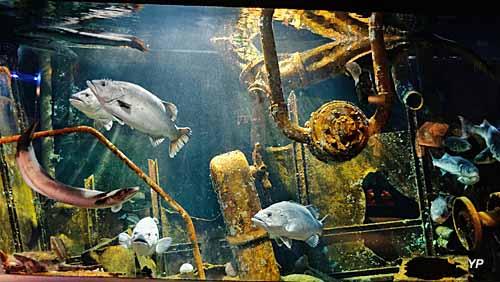 Mareis, centre de découverte de la pêche en mer