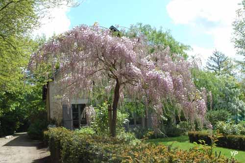 Arboretum Adeline - Wisteria floribunda 'Honbeni'