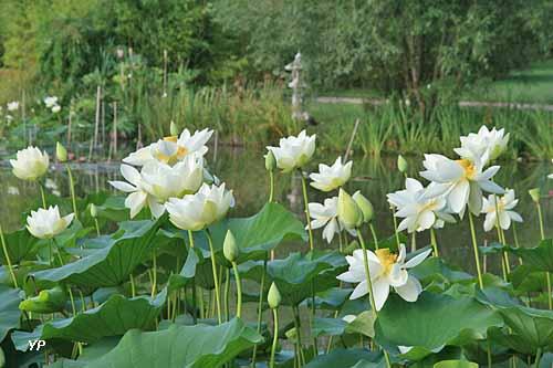 Jardins du Loriot