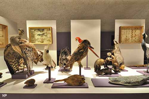 Musée d'Allard - Animaux naturalisés Exposition Muséolexique