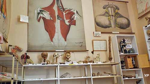 Musée de la Chirurgie Pr Christian Cabrol