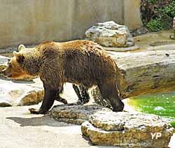 Parc animalier de Gramat - ours