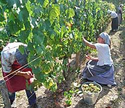 Ecomusée d'Alsace - expo viticulture