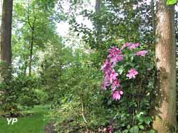 Arboretum des Prés des Culands-Conservatoire National d'Ilex (Arboretum des Prés des Culands)