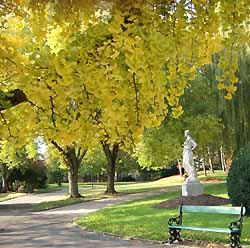 statue sous le ginkgo dans le jardin anglais de Vesoul