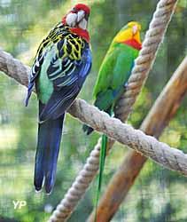 Oiseaux exotiques de la zone tropicale