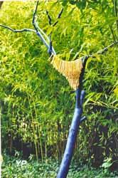 Prunier-Bambou
