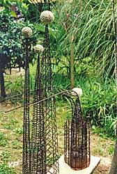 Prunier de bambou (Max Sauze)