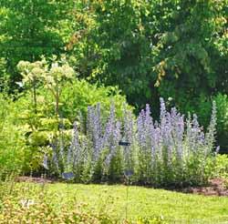 Jardin des plantes sauvages
