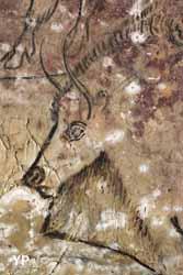Grotte de Niaux - bison (Grands sites d'Ariège)