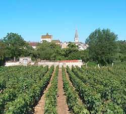Meursault et son vignoble