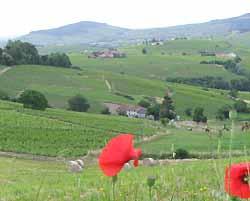 paysage du Beaujolais (doc. OT Beaujeu)