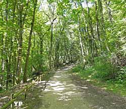 Forêt des Princes