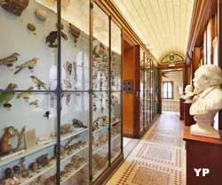 Musée Joseph Denais - galerie d'histoire naturelle (G. Bergeret)