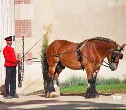 Haras National de Cluny (Haras nationaux)