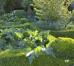 Jardin régulier, chardon bleu