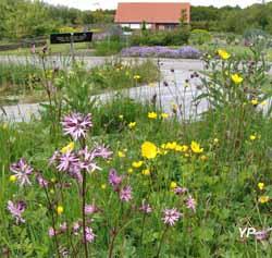 Jardin des Plantes Sauvages et Jardin des Plantes Médicinales