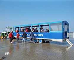 Ballade en Mytilli-mobile (CPIE Baie du Mont-Saint-Michel)