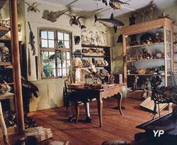 Musée Zoologique, cabinet d'histoire naturelle du professeur Jean Hermann (Musées de la Ville de Strasbourg)