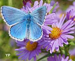 Papillons d'Amarante (doc. Papillons d'Amarante)