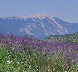 Montbrun les Bains - au loin, le mont Ventous