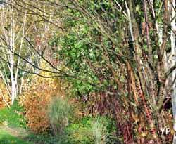 Jardin du Moulin Ventin