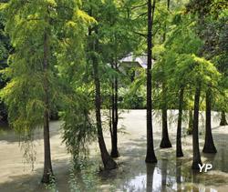 Parc de Bonnefontaine, les taxodiums du deuxième étang