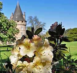 Parc de Bonnefontaine - Rhododendrons