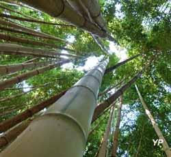 Jardin de bambous (doc. Joan Brisson)