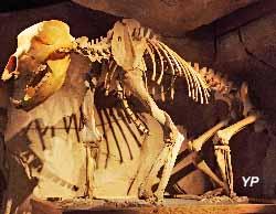 Musée de l'ours des cavernes (Guillaume_Laget)