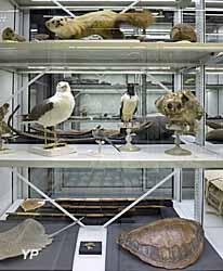 Muséum d'Histoire Naturelle - réserves