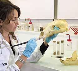 Muséum d'Histoire Naturelle - montage oestoeologique et moulage