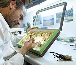 Muséum d'Histoire Naturelle - collection d'insectes (Muséum d'Histoire Naturelle)