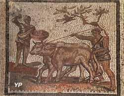 Mosaïque de Saint-Romain-en-Gal (Rhône, IIIe s.) - les labours