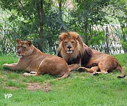 Parc Zoologique - African Safari - couple de lions
