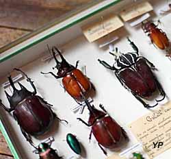 Muséum d'histoire naturelle Philadelphe Thomas (Musées de Gaillac)