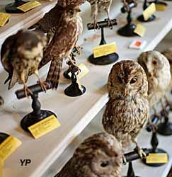 Muséum d'histoire naturelle Philadelphe Thomas