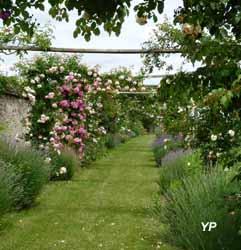 Manoir de La Possonnière - pergola de roses