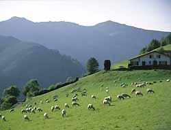 élevage de brebis à Saint-Etienne-de-Baïgorry (doc. OT Saint-Etienne-de-Baïgorry)