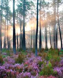 forêt de Mimizan (doc. OT Mimizan)