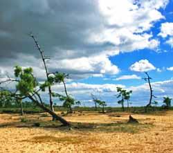 Cabane du Résinier - Réserve Naturelle des Prés Salés (CAP TERMER)
