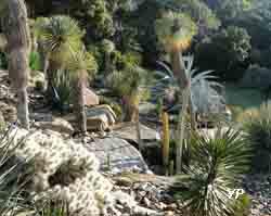 Domaine du Rayol - jardin d'Amérique aride