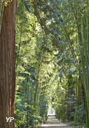 Bambouseraie en Cévennes - allée des séquoia