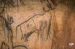 Grotte du Pech-Merle - mammouth, extrait de la Frise Noire (P. Cabrol - Centre de Préhistoire du Pech Merle)