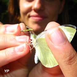 Maison des insectes - OPIE (OPIE)