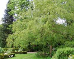 Arboretum Adeline - Ulmus parvifolia