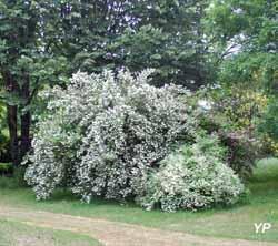 Arboretum Adeline - Massif Deutzia (Arboretum Adeline)